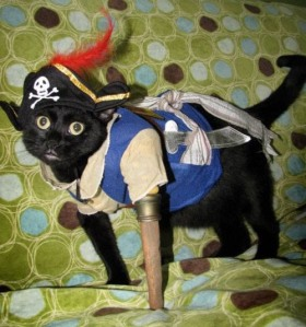 kitty pirate